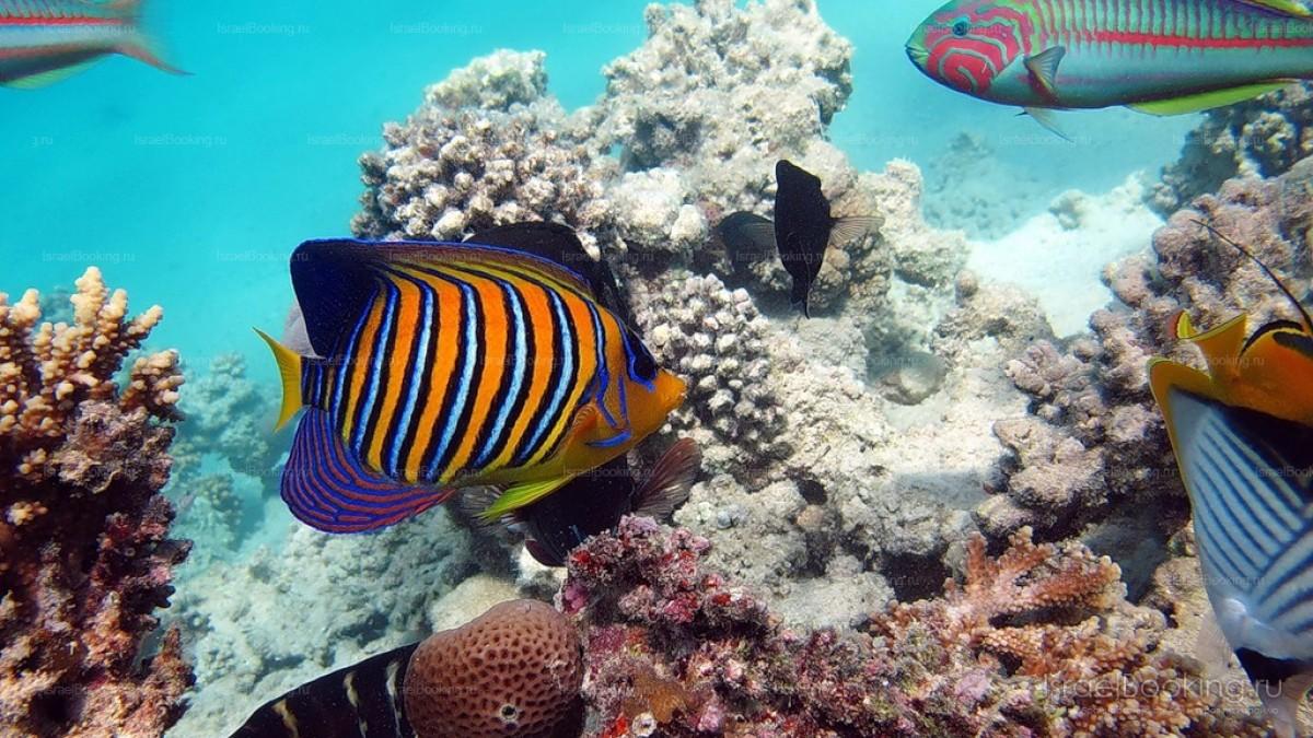Ныряние с аквалангом