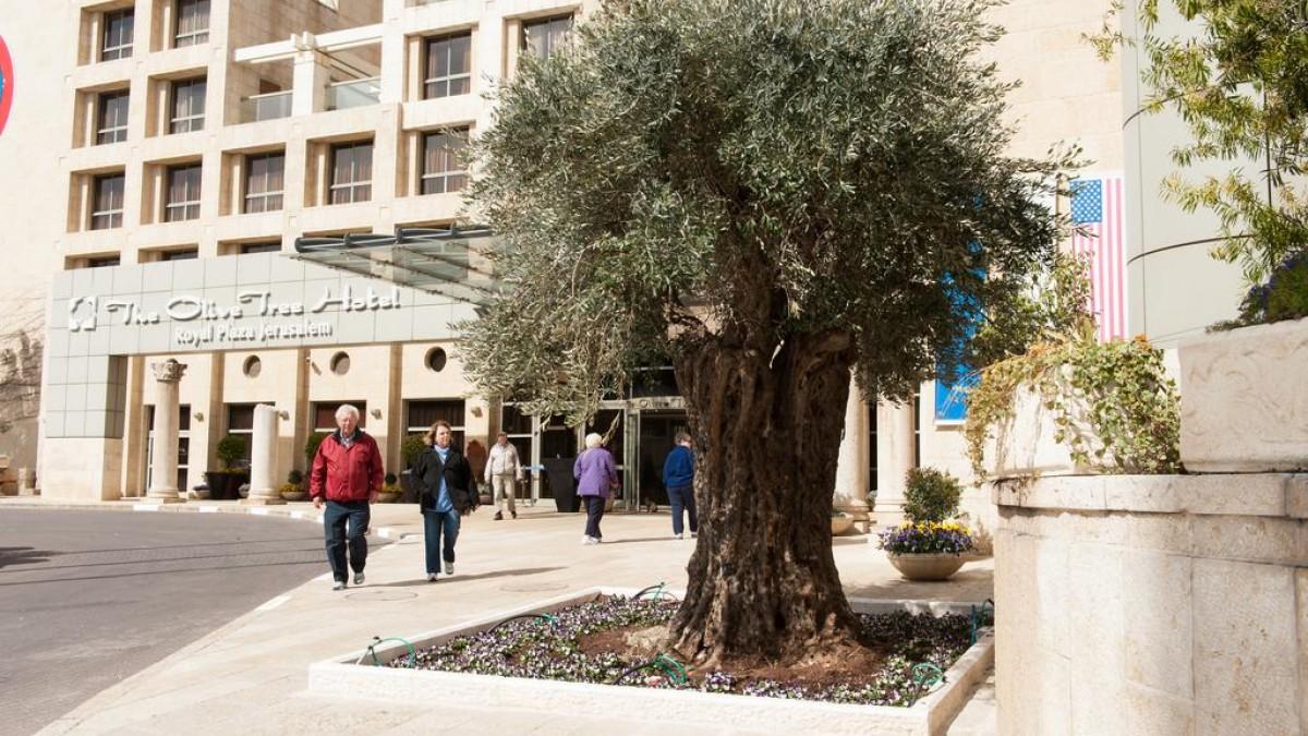 Olive Tree 4*